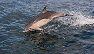 Visit Knoydart - Whales, Dolphins and Sealife