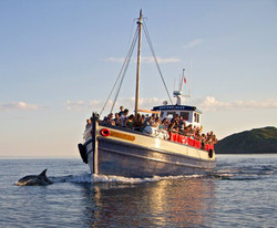 Western Isles Wildlife Spotting
