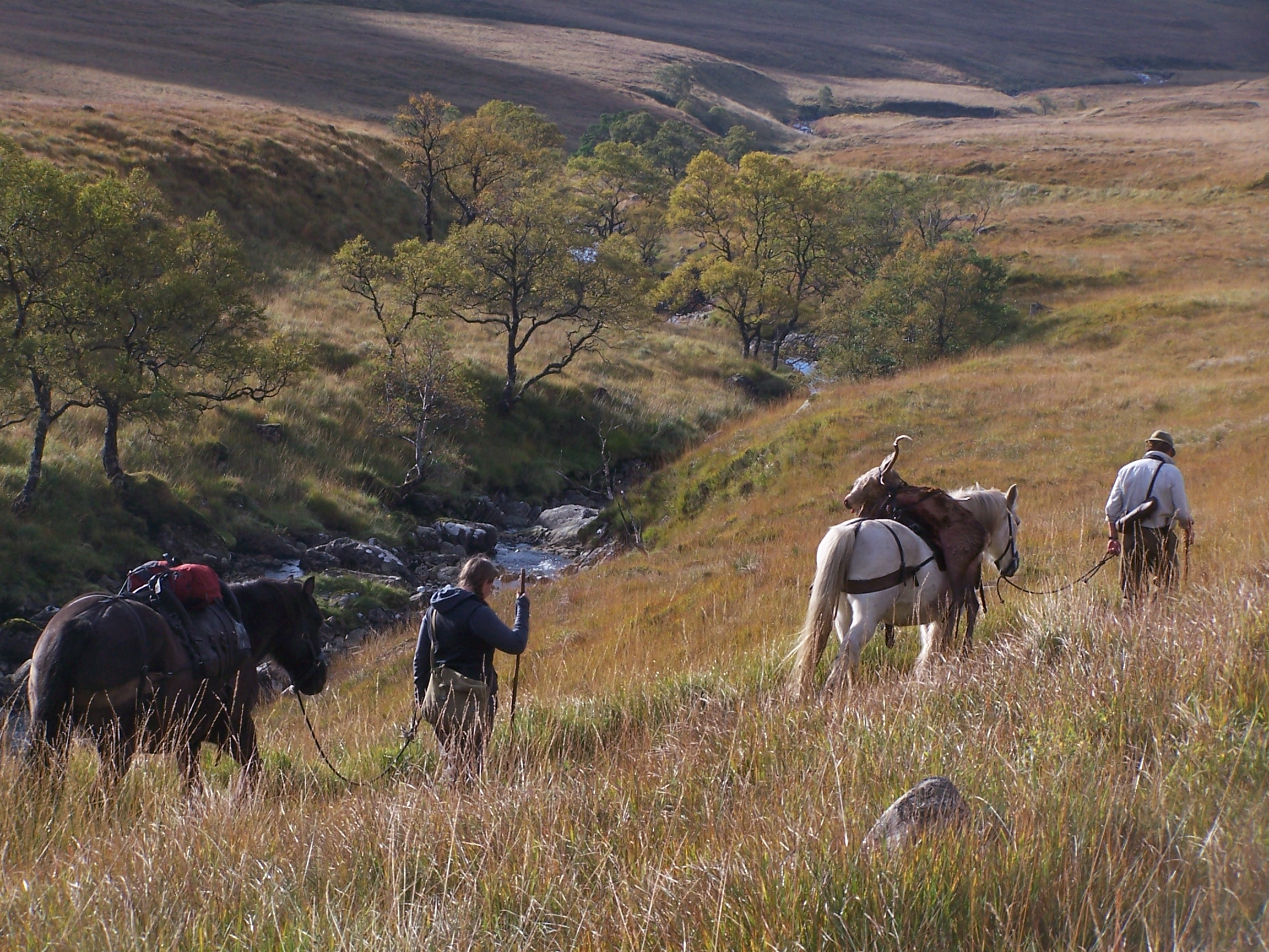 Pony carrying stag