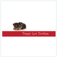 Puppy Luv Yorkies
