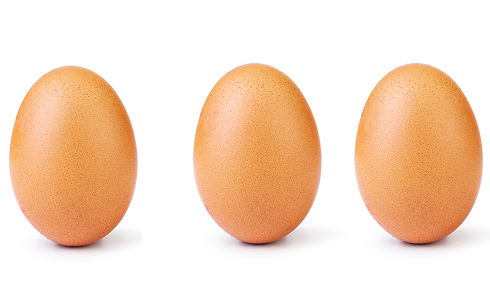 egg-cover.jpg