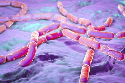dreamstime_bacillus-cereus_bacteria_toxi