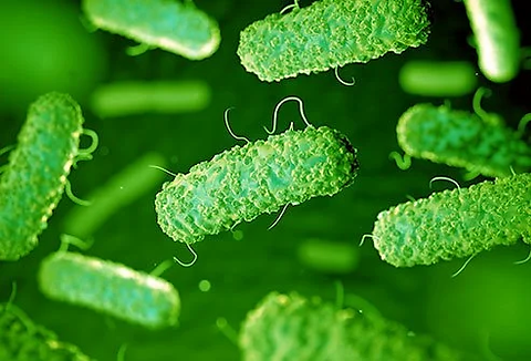 escherichia-coli.webp
