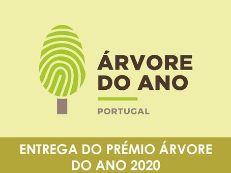 SC propõe que a CMC promova a elaboração de uma carta dos gigantes verdes históricos do concelho
