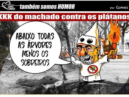 SC alerta: Plátanos do Parque Manuel Braga em risco com as obras de estabilização das margens do rio