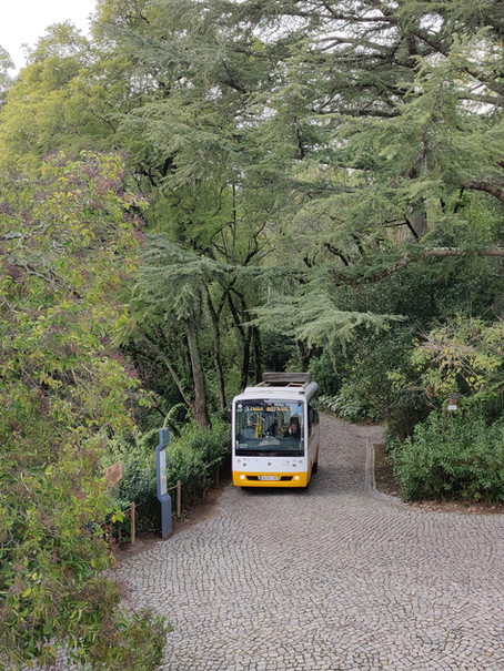 SC apoia a abertura do Jardim Botânico à cidade e sugere elevador panorâmico na Rua da Alegria