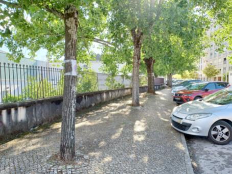 Coimbra precisa de um adequado plano de Arborização