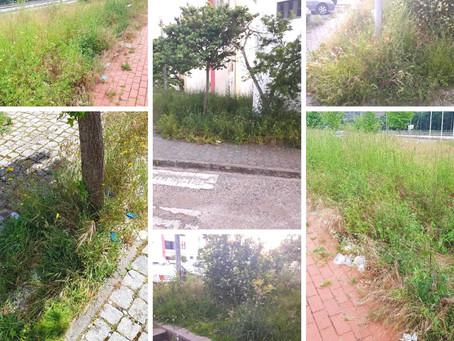 Manutenção e conservação de espaços verdes: SC apoia abertura de concursos públicos com salvaguardas