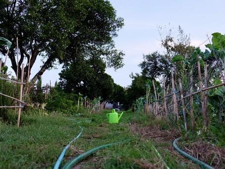 """CMC deve """"lançar a primeira semente e demonstrar a importância das hortas urbanas"""""""