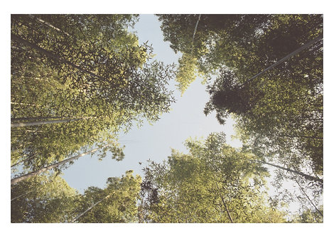 """Japanese Trees"" - Limited Edition Print"