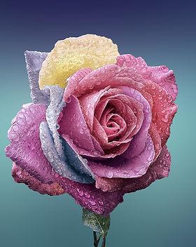 rose-729509_1920.jpg