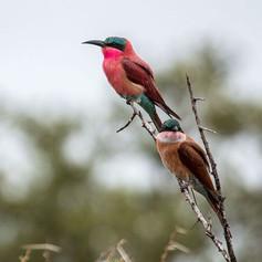 Birds on Greater Kuduland Safaris