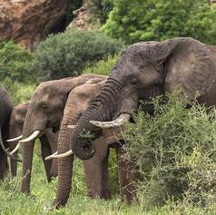 Elephant on Greater Kuduland Safaris