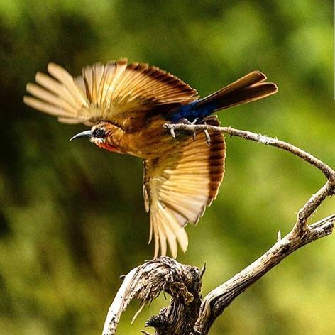 Bird on Greater Kuduland Safaris
