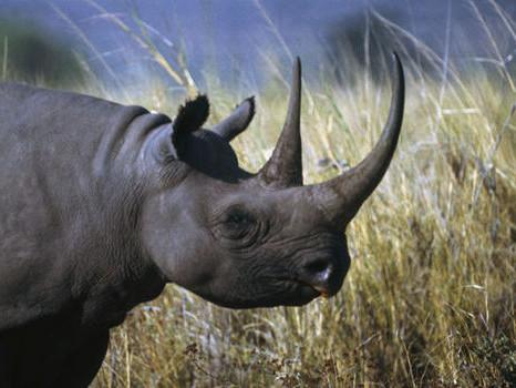 Black Rhino Introduced to Greater Kuduland