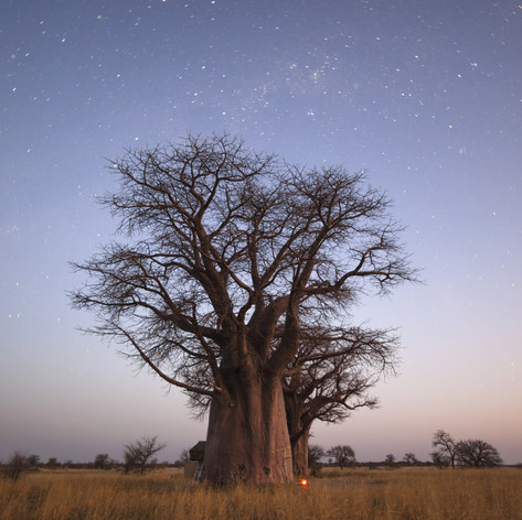 Baobab on Greater Kuduland Safaris
