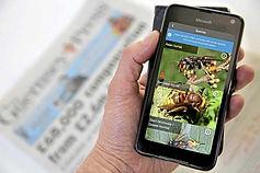 Asian Hornet Watch App by NBU