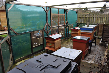 Beekeeping in Yorkshire - My Apiary - The Working Part