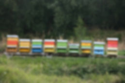 A colourful line of beehives