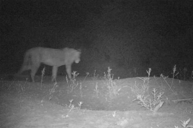 Lost lion population discovered in remote Ethiopia park