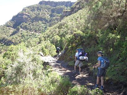 Abi Jacula forest path