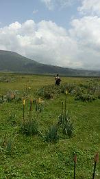 Bale mountain trekking tour