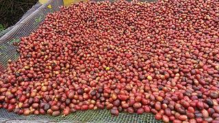 Best Ethiopan coffee bean