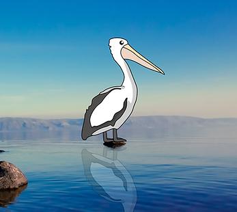 My Pet Pelican.png