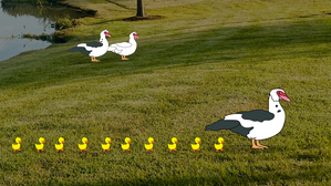 Children of Ducks