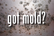 YES, YOU HAVE MOLD
