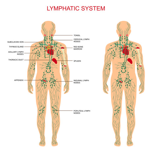 Lymphedema and Musculoskeletal Dysfunction