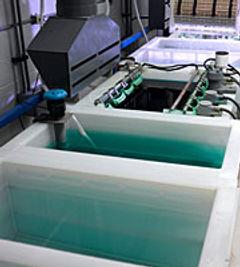 electroplating_pump_process_applications