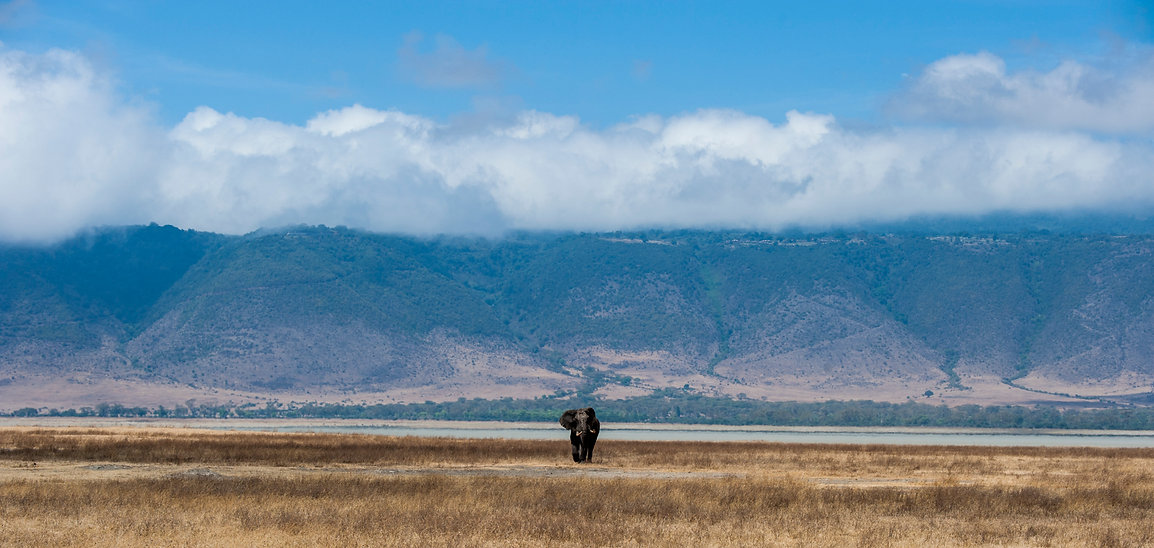 Elephant Bull in Ngorongoro Crater, Tanzania