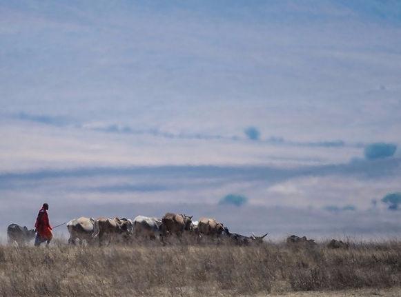 Masaai Herder in the Masai Mara