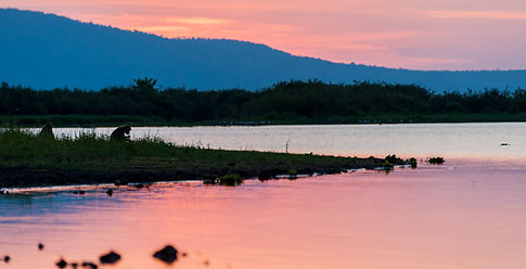 Baboon at sunset-0182.jpg