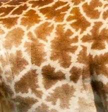 Giraffe skin -8651.jpg