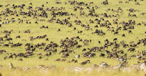 Herds-2.jpg
