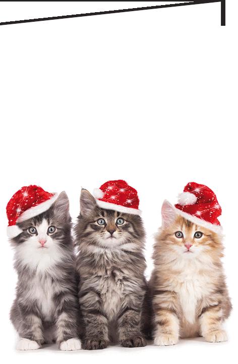 """Nieuwjaarsbrief A5 - """"Kittens"""" (10 stuks)"""