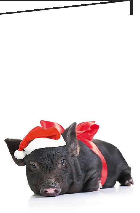 """Nieuwjaarsbrief A5 - """"Piggy"""" (10 stuks)"""