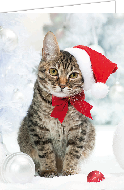"""Nieuwjaarsbrief A5 - """"Kat Strik"""" (10 stuks)"""