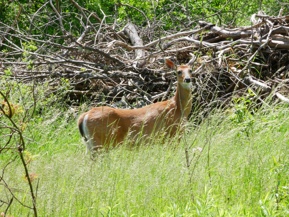 Lots of Wildlife on the Property