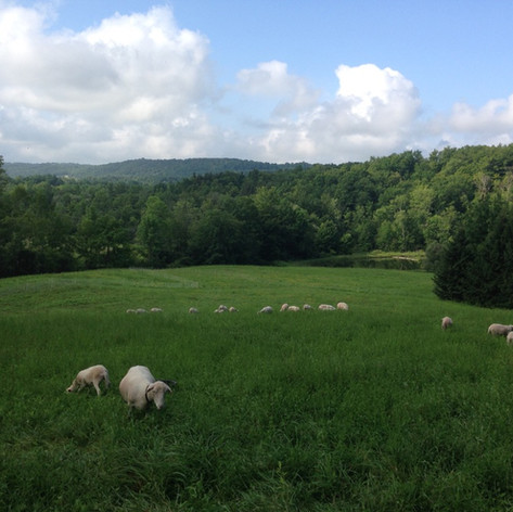 One of seven pastures surrounded by fencing and forests