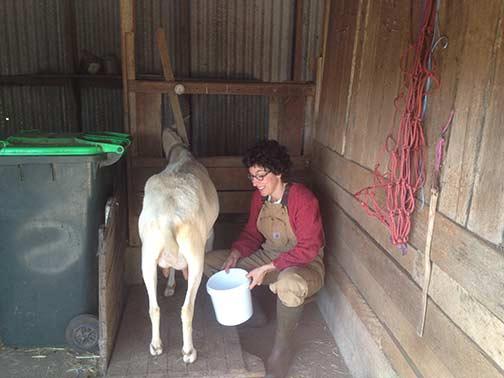 Milking Annie