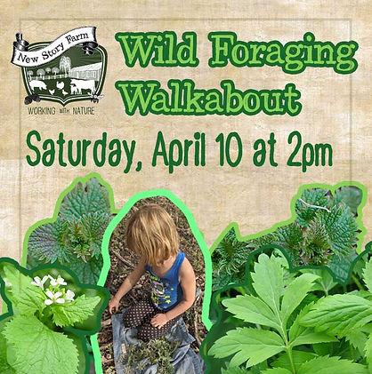 wild-foraging-walk.jpg