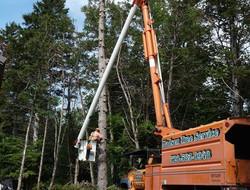 Madsen Tree Trimming