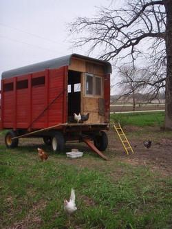 Chicken Wagon
