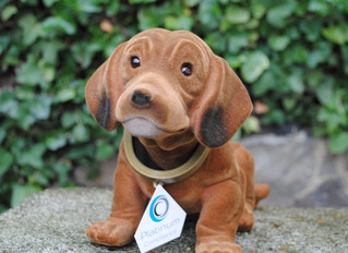 """Percy"" - Platinum's very own Nodding Dog"