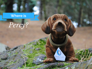 Our Facebook competition Week 1 of 3 - Where was Percy?