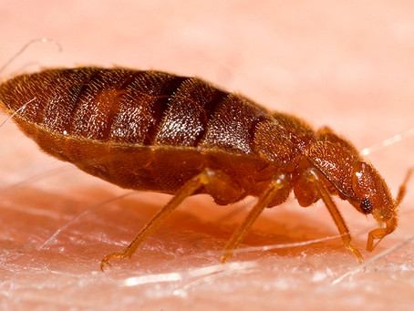 Bed bugs? Fear no more!