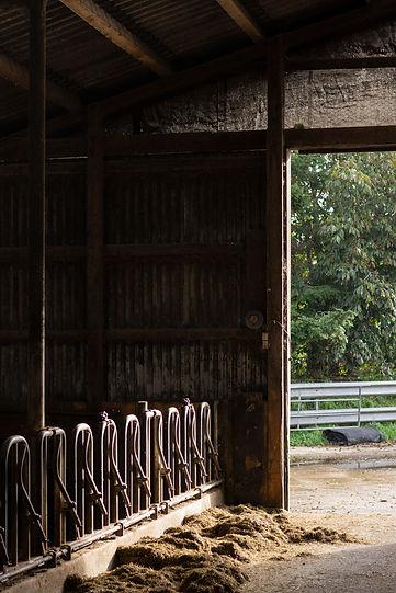 medau, landwirtschaftlicher betrieb, schleswig-holstein, milchbetrieb, landwirtschaft